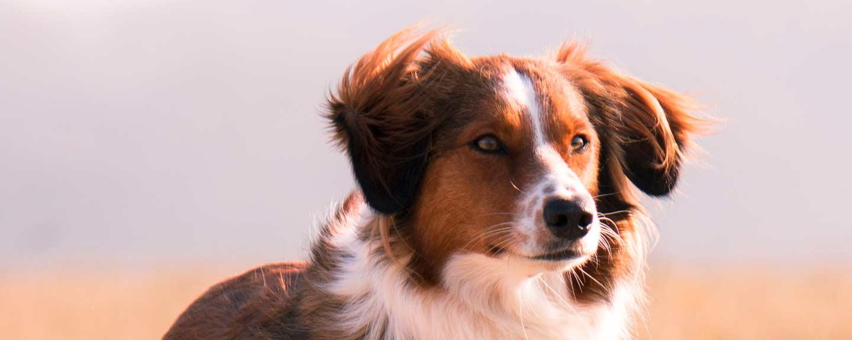 Ganzheitliche Therapien für Ihr Tier